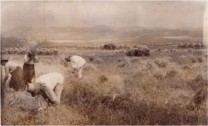 Moara-Gliga-tradite din1940