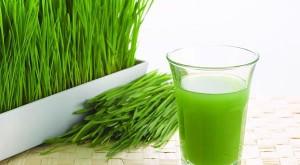 suc orz verde